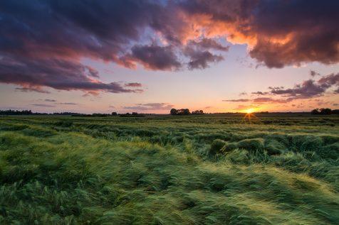 Champ de blé © David Briard