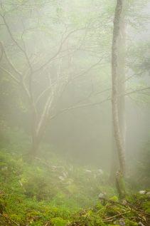 Forêt dans le brouillard © David Briard