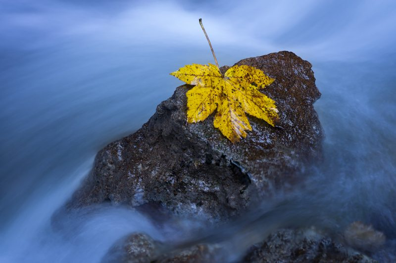 Feuille d'automne sur un rocher © David Briard
