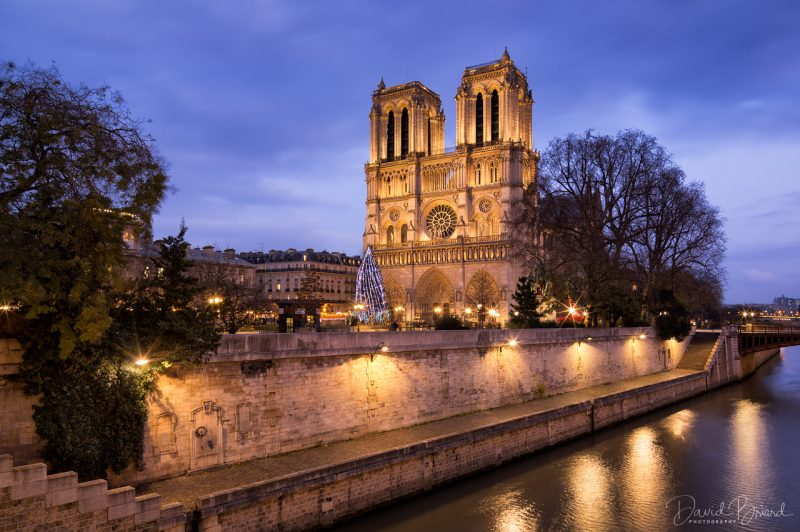 Notre Dame and its Chistmas tree © David Briard